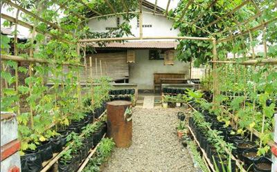 Kebun-Tanaman-Obat-Sari-Alam-Ciwidey